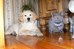 Bruno  ir jo rimtasis katinas
